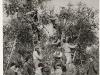 22 - Bitonto - Raccolta delle olive (foto storica)